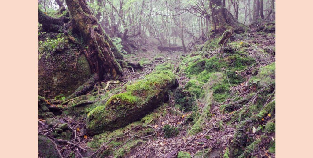 yakushima rainforest