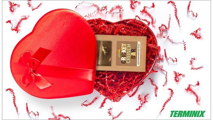 terminix box of crickets - terminix marketing - terminix marketing for valentines day